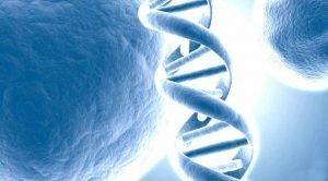 Die DNA van God bepaal ons karakter